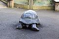ZSL London - Giant Tortoise sculpture (01).jpg