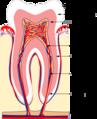 Zahn anaTR.png
