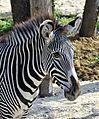 Zoo de Vincennes, Paris, France April 2014 (3).jpg