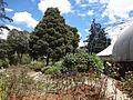 (Jardín Botánico de Quito). pic a1.JPG