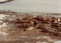 (Jubany) Recuento de mamíferos (10).png