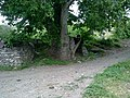 Çınara bakış 3 - panoramio.jpg