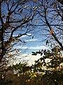 Ανατολη απο το δασος στην Τσαγκαραδα.jpg
