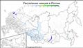 Ареал расселения немцев в России. По данным Всероссийской переписи населения 2010 года.png