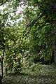 Ботанічний сад Подільського державного аграрно-технічного університету.jpg