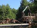 Верхний склад леса - panoramio.jpg