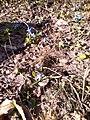 Весна у заказнику 01.jpg