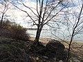"Вид на Финский залив и валун ""Киви"" в п.Мартышкино.jpg"