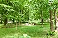 Виноградів Парк 4660.jpg