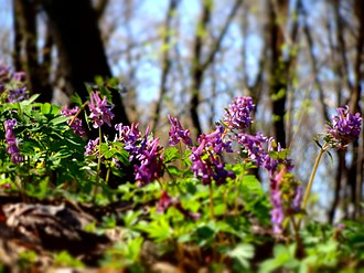 Holosiivskyi National Nature Park - Image: Голосіївський ліс. Весна