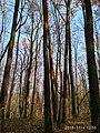 Еталонна діброва Вінницьке лісництво 4.jpg