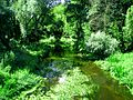 Затока ракі Лясной - panoramio.jpg