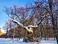 Кочубеївські Дуби у Регіональному ландшафтному парку «Диканський» 3.jpg