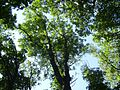 Крона - panoramio.jpg