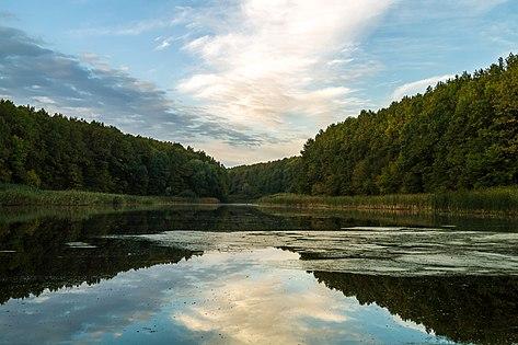Лісове озеро у Чорному лісі.jpg