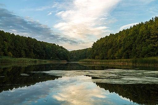Лісове озеро у Чорному лісі