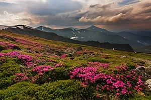 Літо у горах.jpg