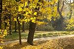 Осіннє сонячне проміння в парку Олександрія.jpg