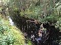Павручей (ручей, впадает в Белое море) 3.jpg