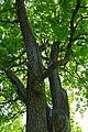 Парк Сергиевка (5).jpg