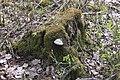 Пискарёвский лесопарк, дикая часть (2).jpg