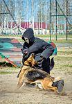 Собаки НГУ 4224 (19348659662).jpg