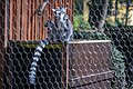 حیوانات باغ وحش مرکزی شهر تفلیس پایتخت گرجستان 50.jpg
