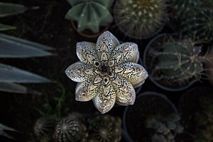 گونه های کاکتوس در گلخانه دنیای خار در قم 45.jpg