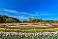 あけぼの山農業公園のチューリップ02.jpg
