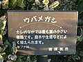三笠公園 - panoramio (27).jpg