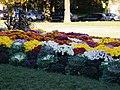多伦多大学花坛 - panoramio.jpg