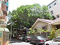 榮譽街123巷旁的大榕樹 - panoramio.jpg