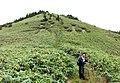 泉山(笹原の切り込み) - panoramio.jpg