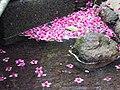 落花 Fallen blossoms - panoramio.jpg