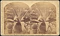 -Group of 18 Stereograph Views of the 1884-1885 New Orleans Centennial International Exhibition- MET DP75670.jpg