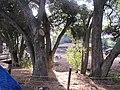 - panoramio (937).jpg