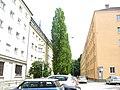 09.06.2013. München -Giesing - panoramio (2).jpg