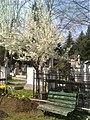12. Bucuresti, Romania. Cimitirul Bellu Catolic. Zi de primavara in Cimitir, martie 2017. Bancuta sub pom.jpg