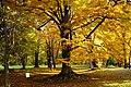 131103 Hokkaido University Botanical Gardens Sapporo Hokkaido Japan15s3.jpg