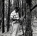 1964. Research entomologist Charles Sartwell examining a ponderosa pine killed by mountain pine beetle. Lookout Mountain, near La Pine, Oregon. (35164397355).jpg