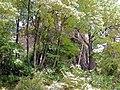 20060524150DR Mahlitzsch (Roßwein) Burgruine Kempe.jpg