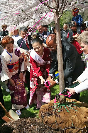Subaru Cherry Blossom Festival of Greater Philadelphia - Tree planting ceremony with Japan's Cherry Blossom Queen and Philadelphia Mayor Michael Nutter.
