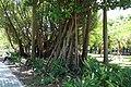 2010 07 21330 6788 Da'an District, Taipei, Daan Park, Taiwan, Trees.JPG