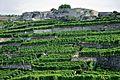 2012-08-12 10-18-49 Switzerland Canton de Vaud Rivaz.JPG