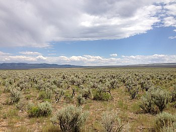Sagebrush Steppe