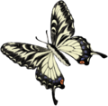 201601 Swallowtail butterfly.png