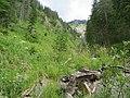 2017-07-22 (09) Lechnergraben at Dürrenstein (Ybbstaler Alpen).jpg