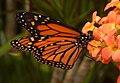 2019-04-15 13-16-28 jardin-papillons-hunawihr.jpg
