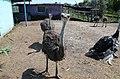 2019-08-10. Зоопарк в Придорожном 108.jpg