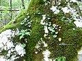 24 Soca Trail (29375814032).jpg